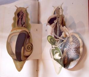 escargot open